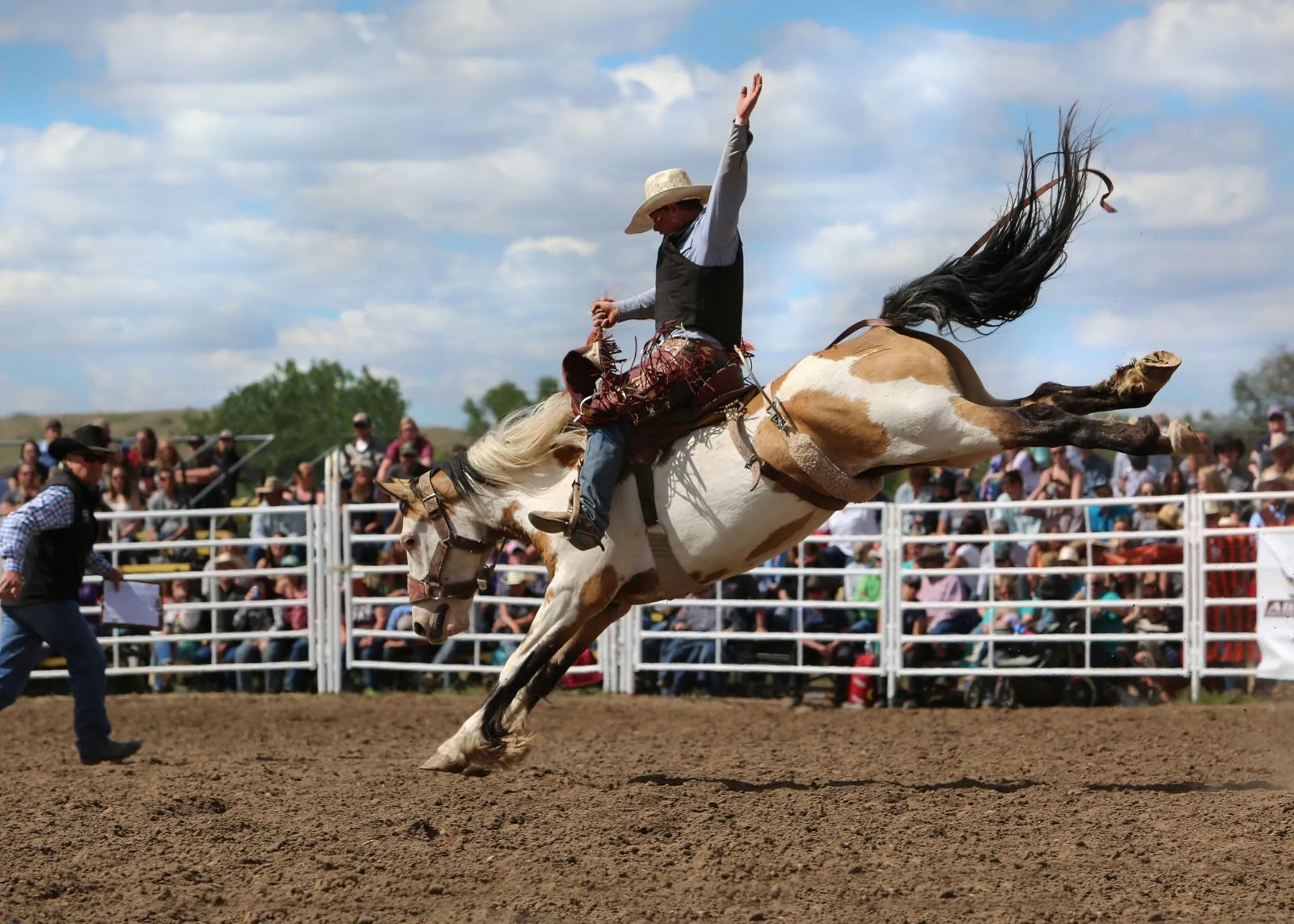 The World Famous Bucking Horse Sale